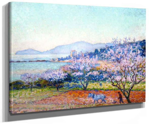 Almond Tree In Blossom (Also Known As Almandiers En Fleurs (Matin)) By Theo Van Rysselberghe