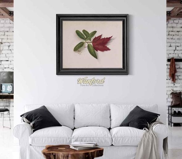 Leaves By Mary Vaux Walcott