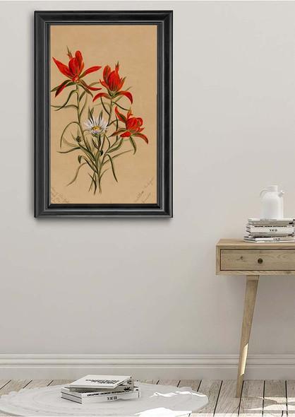 Indian Paintbrush (Castilleja Rhexifolia) By Mary Vaux Walcott