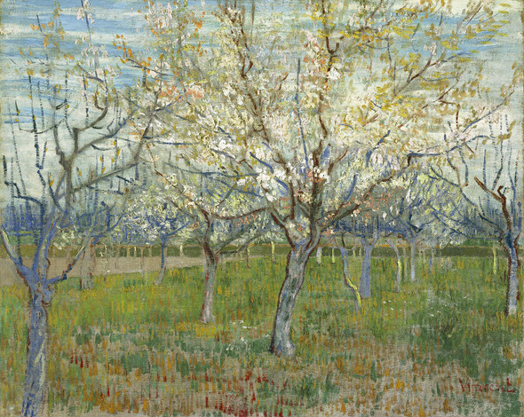 The Pink Orchard Also Orchard With Blooming Apricot Trees by Vincent Van Gogh