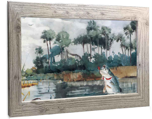 Black Bass Florida Winslow Homer