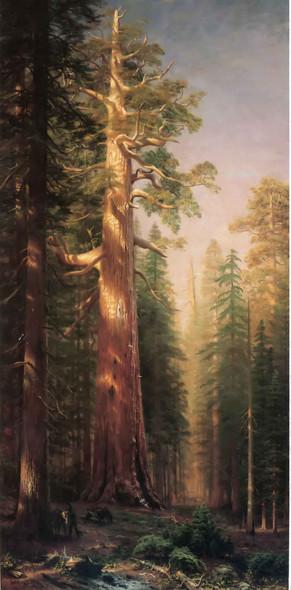 The Great Trees Albert Bierstadt