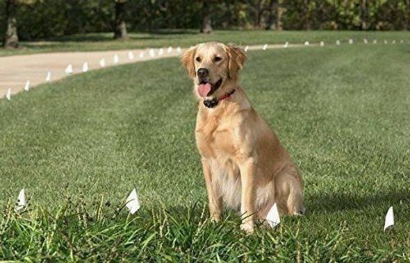 Dogtra 1900S Wetlands Remote Dog Training System 1 Dog
