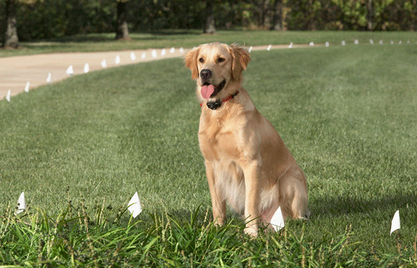 """Sparky Pet Co Invisible Fence Compatible R21 R22 R51 Nylon  3/4"""" 2 Hole 1 5/8"""" Strap"""
