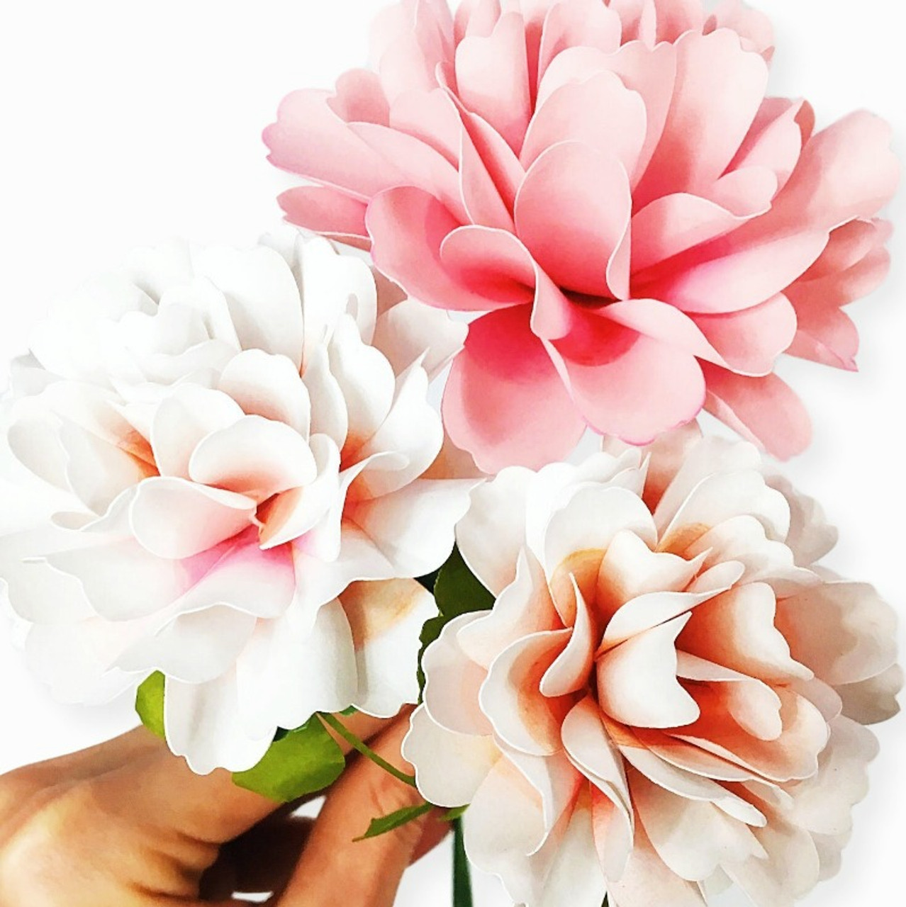 carnation paper flower templates catching colorflies