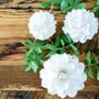 Paper rose flower balls.