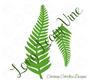 Long fern template