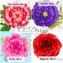 Chrysanthemum, Arielle, Bella rose, Majesty rose.