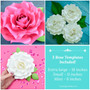 Large and Small Paper Rose Templates - Set of 3