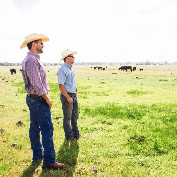 sunfed-sfr-0008-ranchers-4-600x600.jpg