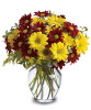 Fall for Daisies in Rockville MD, Palace Florists