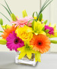 Starburst in Bethesda MD, Palace Florists