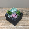 Silver Spring Succulents showcases beautiful succulents in a ceramic container in Washington DC and Rockville MD, Palace Florists