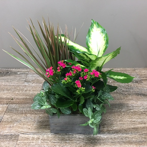 Our small Woodland Planter showcasing a collection of green plants in rustic wood planter in Washington DC and Rockville MD, Palace Florists