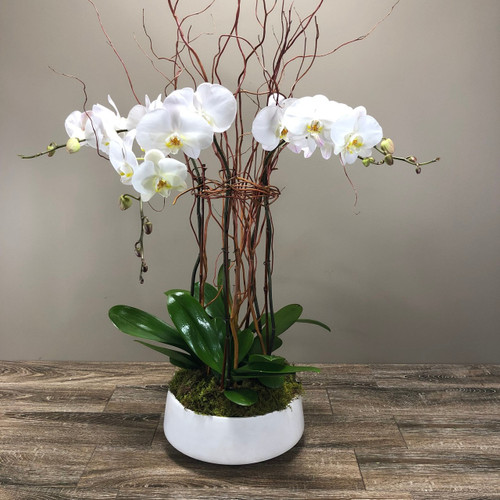 Cluster of White Orchids - Local Delivery Only