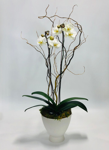 Orchid in Mod Container in Rockville MD, Palace Florists