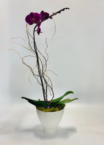 Purple Single Stem Orchid in Mod Container in Rockville MD, Palace Florists