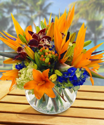 Tropical Nights features birds of paradise, orchids, lilies and more in a glass buble bowl in Silver Spring MD, Palace Florists
