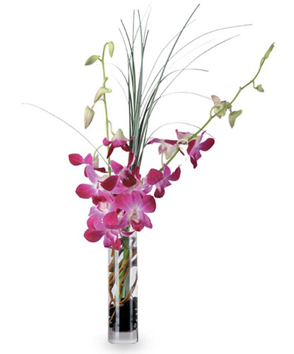 Dendro Delight in Rockville MD, Palace Florists