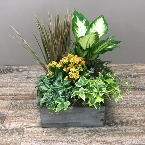 Woodland Planter showcasing a collection of green and blooming plants in rustic wood planter in Washington DC and Rockville MD, Palace Florists
