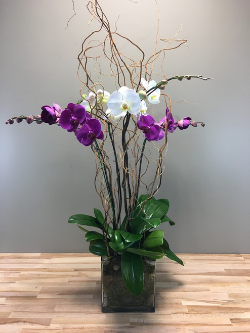 Orchid Oasis in Washington DC and Rockville MD, Palace Florists
