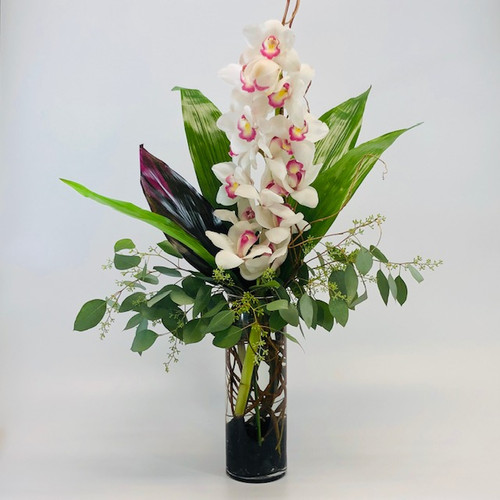 White Cymbidium Orchid Stem in Rockville MD, Palace Florists