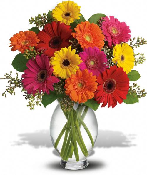 Gerbera Brights showcases vibrant gerber daisies and foliage in a clear glass vase in Washington DC and Rockville MD, Palace Florists