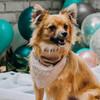 Personalized Pet Bandana Gold & Blush