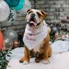 Personalized pet bandana white