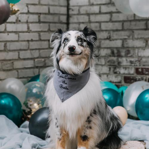 Personalized Pet Bandana Grey