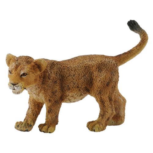 African Lion Cub Walking