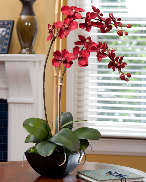 Simple red vanda orchid in stylish black resin container