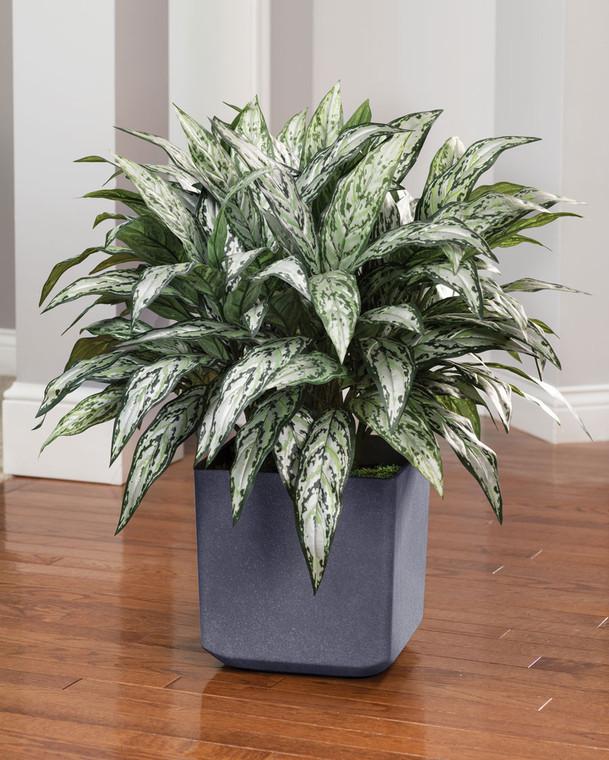 Double Silk Silver Queen Plant