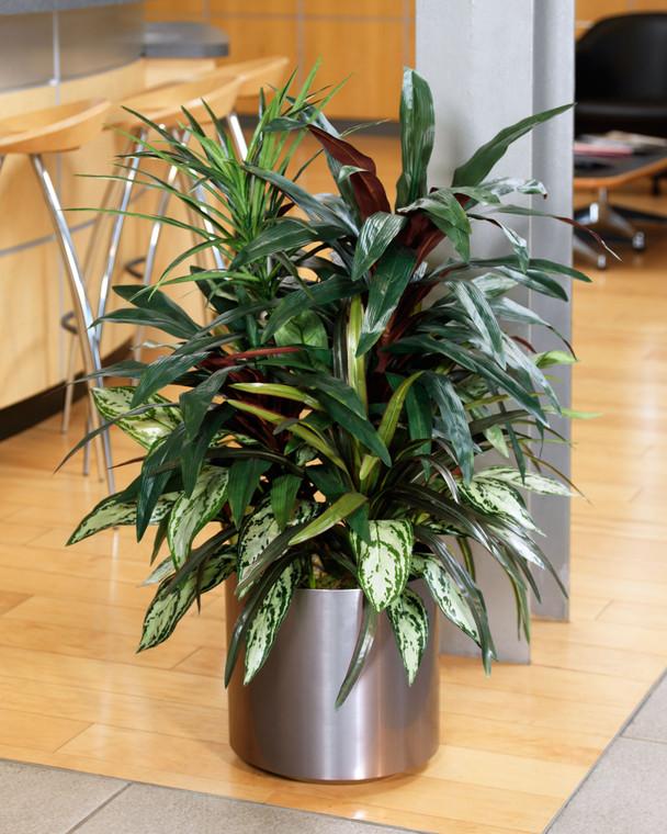Mixed Silk Dracaena Plant