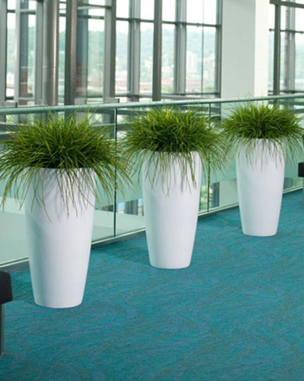 Kenwood Grass Plant