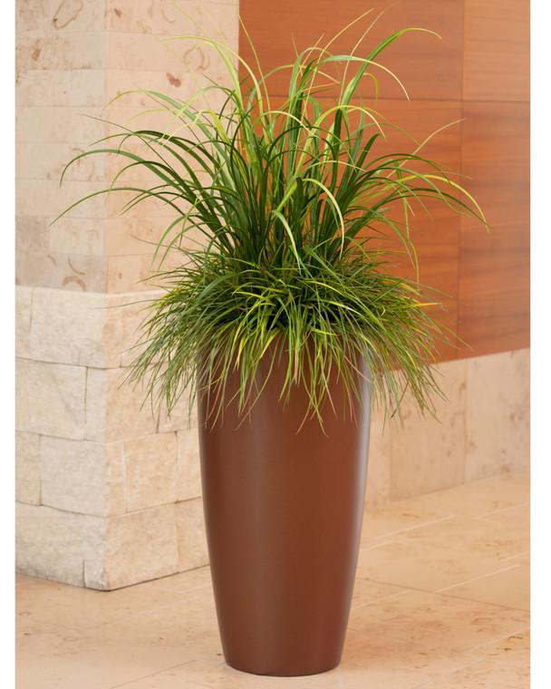 Mixed Grass Plant