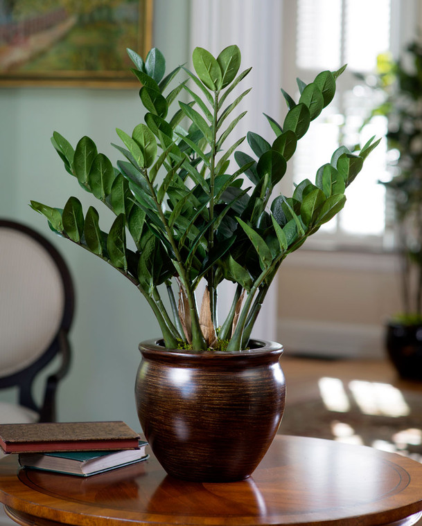 """Carefree exotic 23"""" ZZ Silk Plant for tabletop"""
