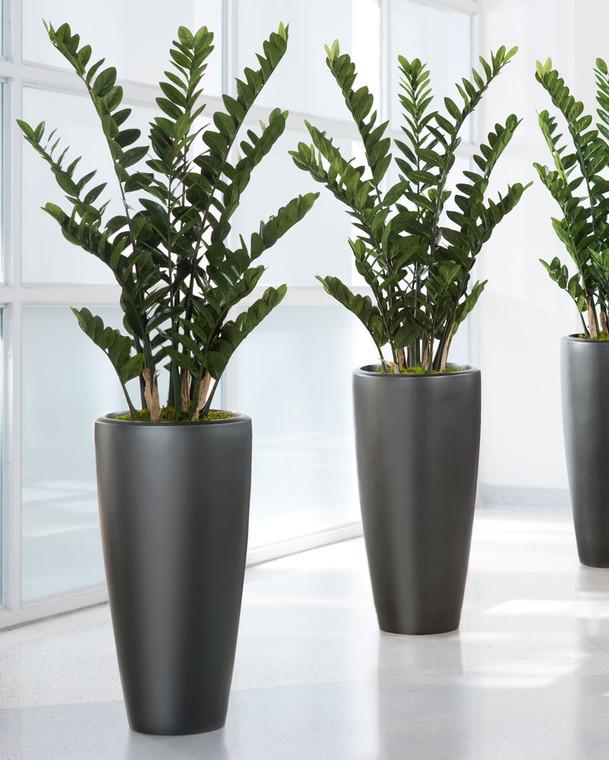 Exotic 4' ZZ Silk Plant