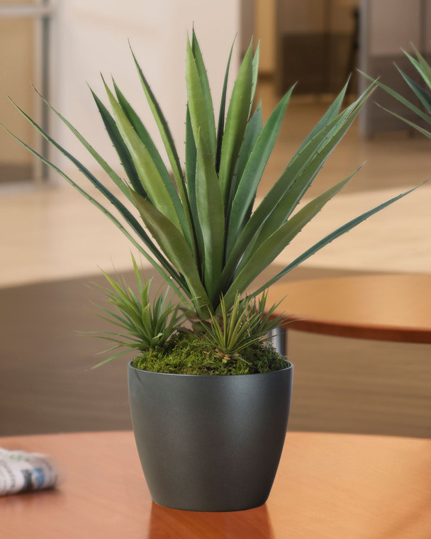 Medium Lifelike Succulent Agave Americana Artificial Plant is ideal for tabletops
