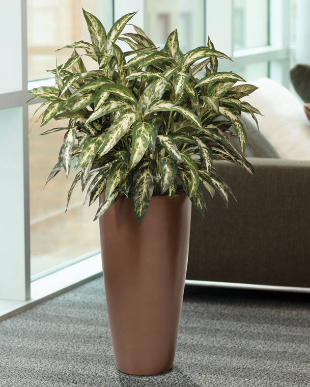 Double Chinese Evergreen Silk Floor Plant
