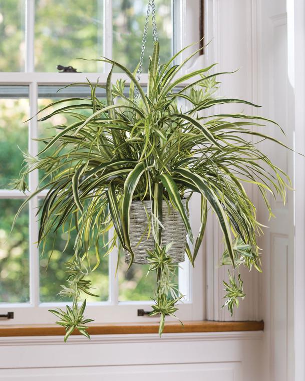 Hanging Spider Plant Silk Foliage Planter