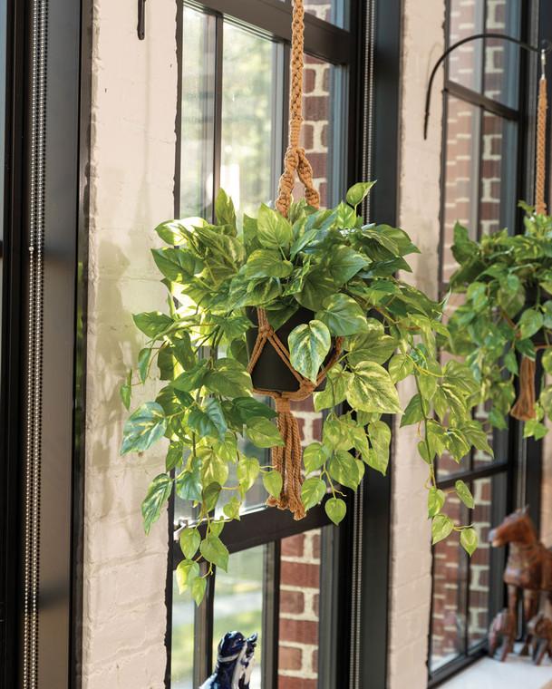 Hanging Pothos Silk Foliage Plant