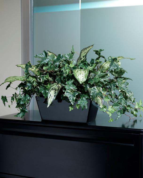 Silk Ivy Filetop