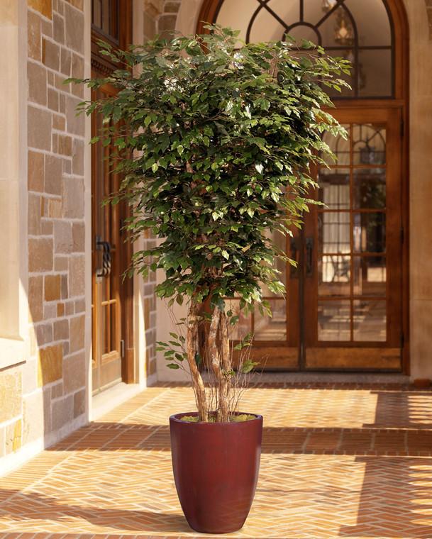 Deluxe Ficus Tree - 8ft