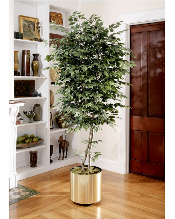 Natural 6' trim silk ficus tree with over 1500 lifelike leaves