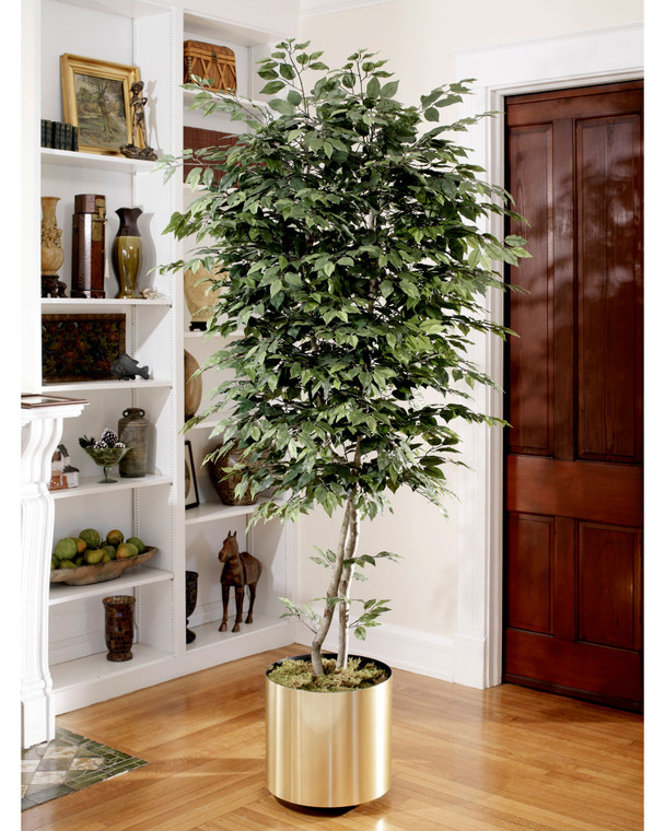 Natural 7' trim silk ficus tree with over 1500 lifelike leaves
