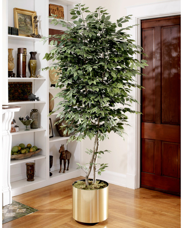 Natural 8' trim silk ficus tree with over 1500 lifelike leaves