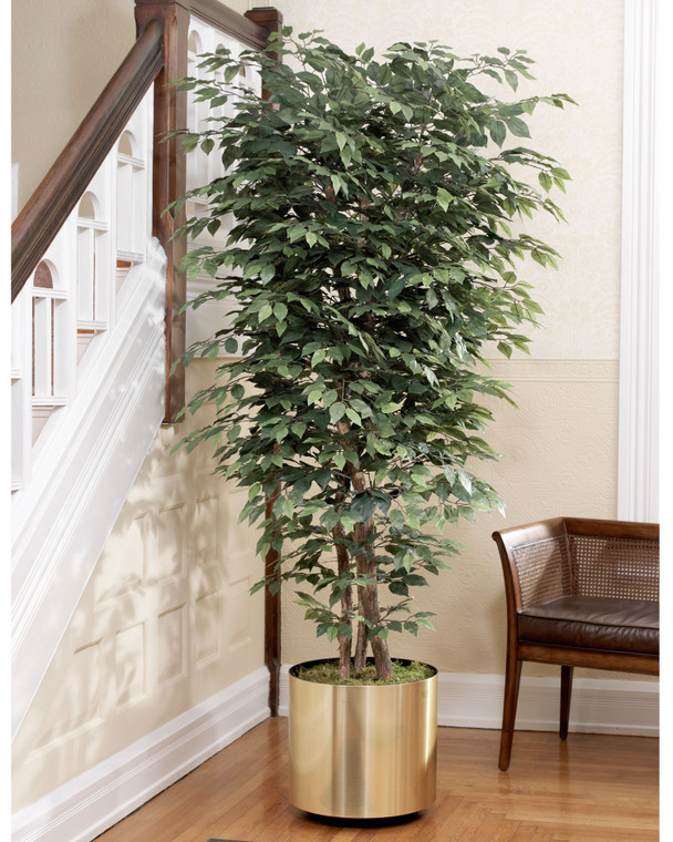 Realistic 6.5' silk ficus bush with authentic wood trunk and over 2000 leaves