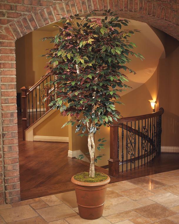 Trim Silk Capensia Tree - 8ft