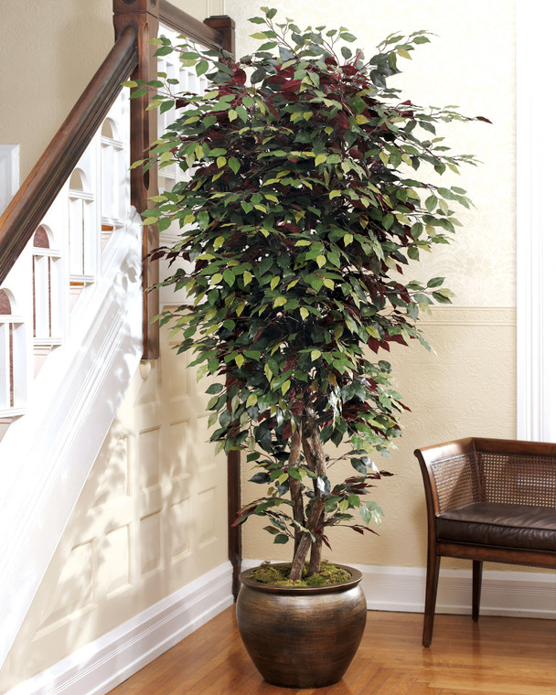 5.5 capensia silk bush with real wood trunk and lifelike leaves